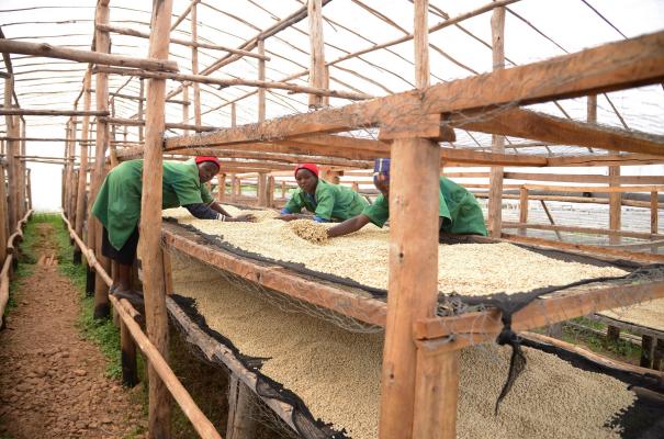 Kaffee aus Rwanda Gekenke District